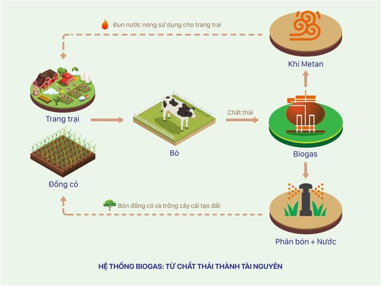 12 trang trại bò sữa 4.0 của Vinamilk đang được triển khai dùng năng lượng mặt trời ảnh 4