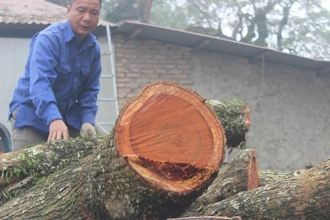 Lô gỗ sưa từng định giá 'trăm tỷ' giảm bao nhiêu sau 4 phiên đấu giá không thành? ảnh 1