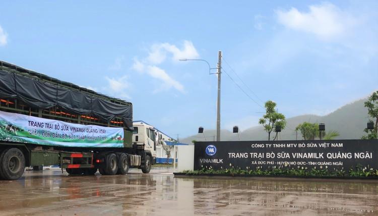 Thêm 2.100 con bò sữa từ Mỹ đã gia nhập đàn tại trang trại Vinamilk Quảng Ngãi ảnh 4