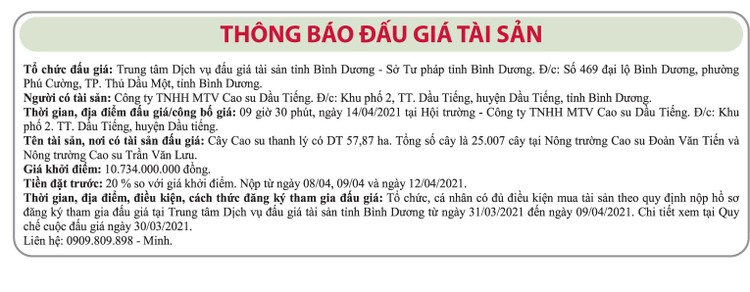 Ngày 14/4/2021, đấu giá 25.007 cây cao su thanh lý tại tỉnh Bình Dương ảnh 1