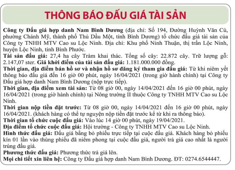 Ngày 19/4/2021, đấu giá 22.872 cây tràm khai thác tại tỉnh Bình Phước ảnh 1