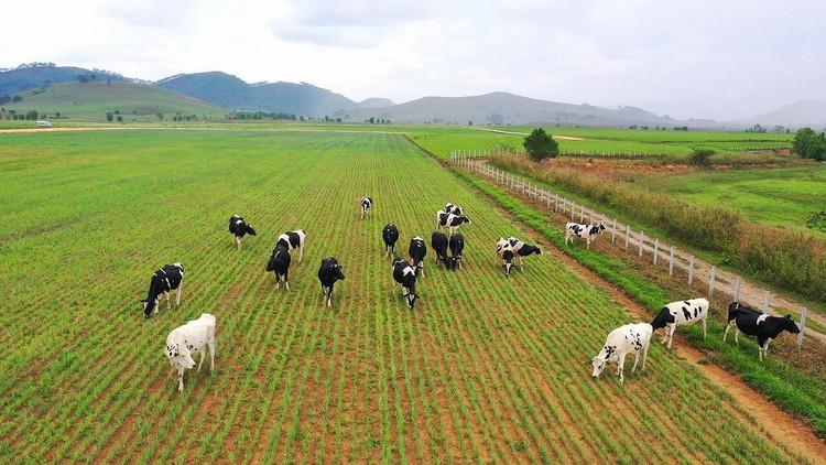 """Siêu dự án trang trại của Vinamilk tại Lào sẽ """"cho sữa"""" vào đầu năm 2022 ảnh 4"""