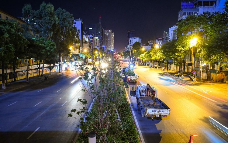 Trắng đêm đốn chuyển cây phong trên đường Trần Duy Hưng ảnh 2