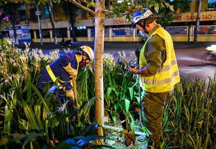 Trắng đêm đốn chuyển cây phong trên đường Trần Duy Hưng ảnh 6