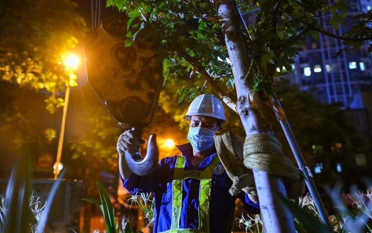 Trắng đêm đốn chuyển cây phong trên đường Trần Duy Hưng ảnh 7
