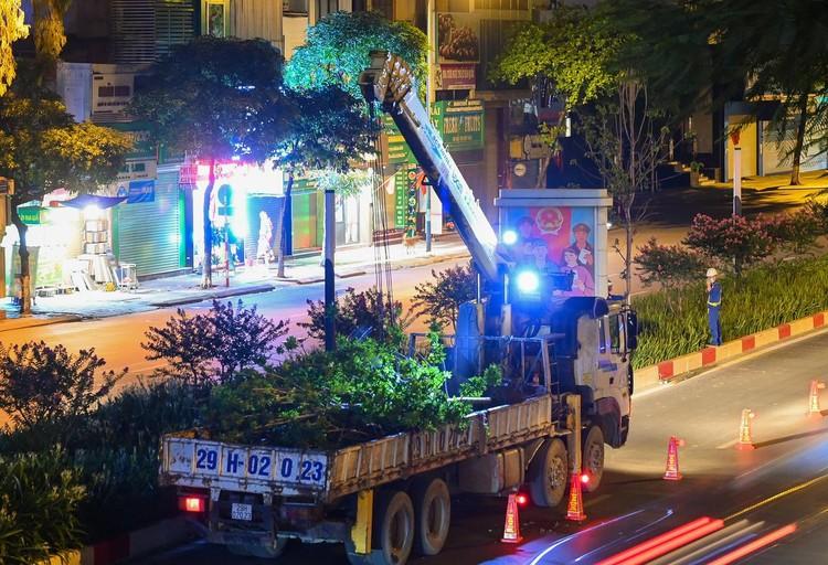 Trắng đêm đốn chuyển cây phong trên đường Trần Duy Hưng ảnh 8