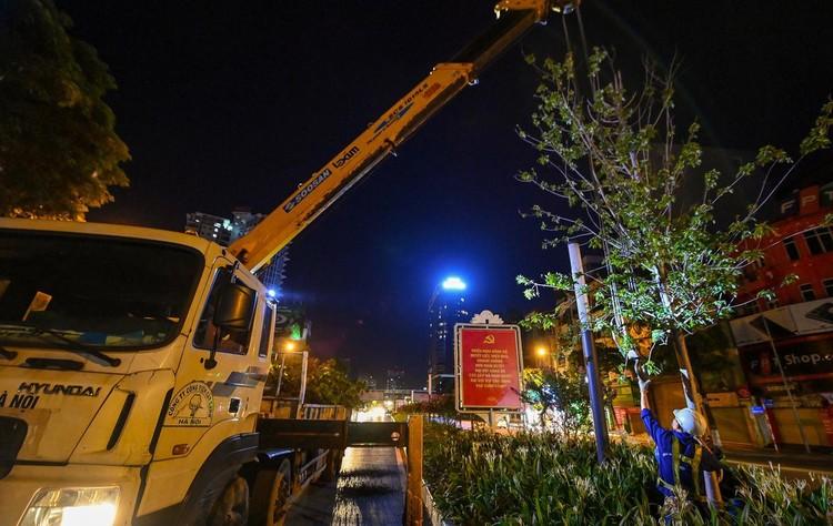 Trắng đêm đốn chuyển cây phong trên đường Trần Duy Hưng ảnh 9