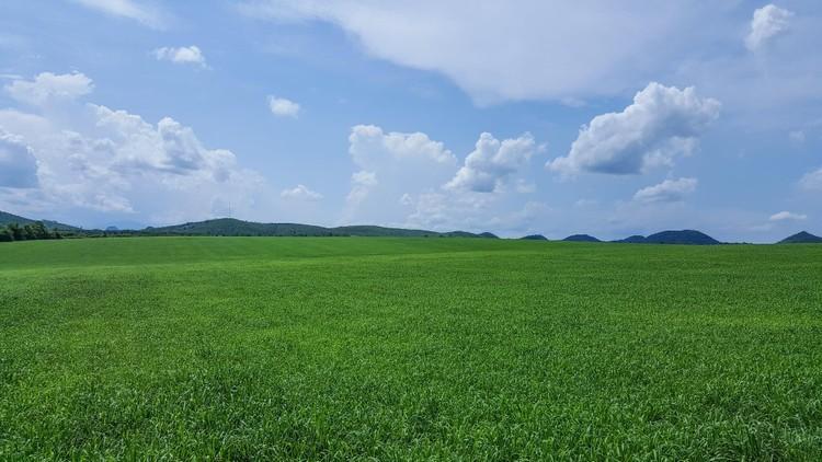 Câu chuyện thật về những đồng cỏ Mombasa lớn nhất thế giới ảnh 1
