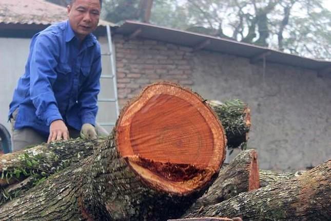 Lô gỗ sưa 'trăm tỷ' chưa thể tổ chức đấu giá lần 5 ảnh 1
