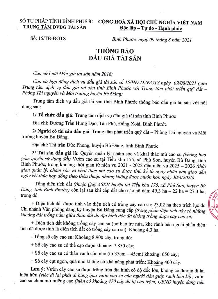 Ngày 27/8/2021, đấu giá quyền khai thác mủ cao su tại tỉnh Bình Phước ảnh 2