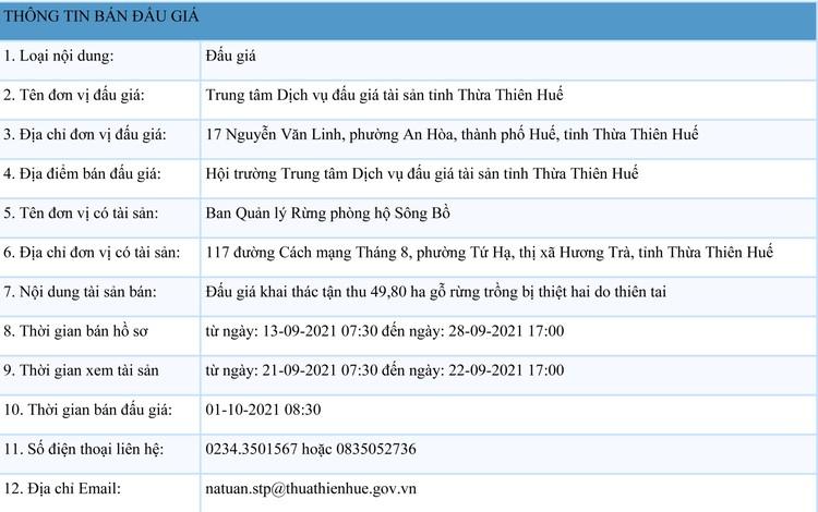 Ngày 1/10/2021, đấu giá khai thác tận thu 49,80 ha gỗ rừng trồng tại tỉnh Thừa Thiên Huế ảnh 1