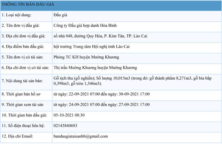 Ngày 5/10/2021, đấu giá gỗ nghiến tịch thu tại tỉnh Lào Cai ảnh 1