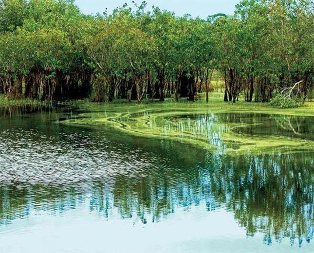 Thanh tra chỉ ra nhiều sai phạm trong giao khoán đất rừng ở Bà Rịa - Vũng Tàu ảnh 1
