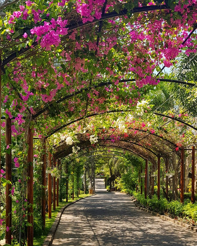 Carmelina - Khu vườn nhiệt đới bên bờ biển ảnh 3