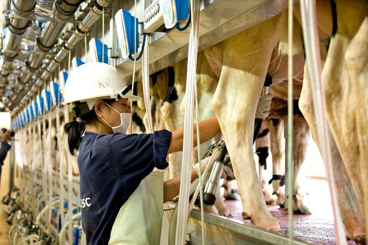 Tập đoàn TH tặng 1 triệu ly sữa tươi, chung tay đẩy lùi dịch Covid-19 ảnh 1