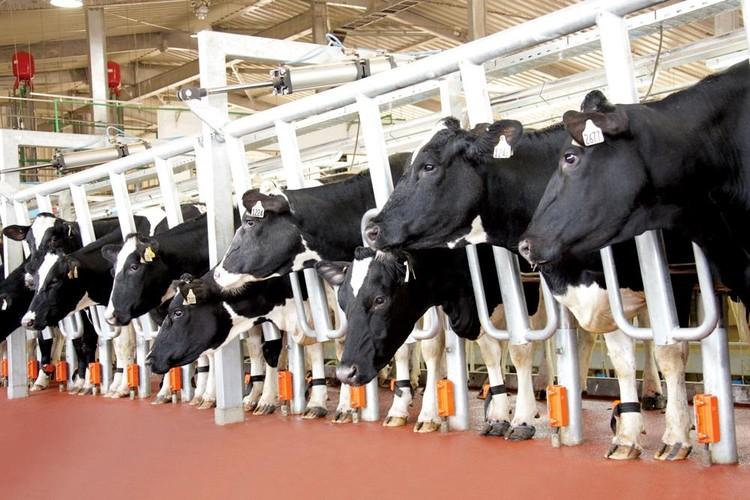 Con đường đến đẳng cấp thế giới của sữa tươi sạch Việt Nam ảnh 1